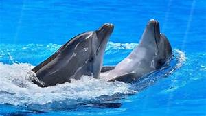 Happy Dolphins Animated Wallpaper http://www ...