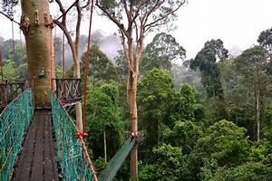 The rainforest Canopy walkway bridges - Picture of Borneo ...