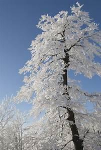 White as Snow: A Winter Family Bible Study – Cheri Gamble