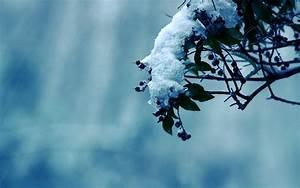 Widescreen Backgrounds Winter | wallpaper, wallpaper hd ...
