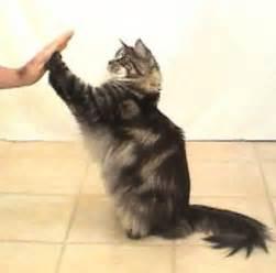 cat clicker clicker with cats