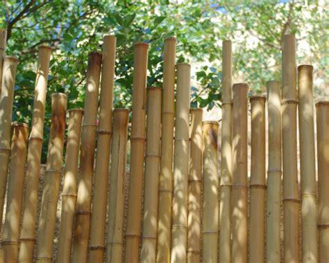 entretien des canisses  palissades bambou