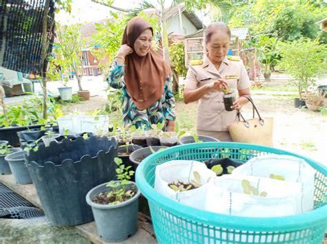 นราธิวาส ติดตามการปลูกพืชผักสวนครัวตามโครงการส่งเสริมสตรี ...