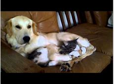 hund und katze lustig YouTube