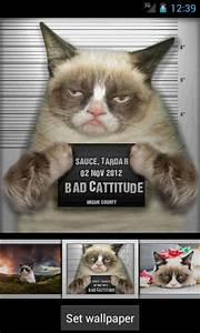 Information About Grumpy Cat Iphone Wallpaper Yousense Info