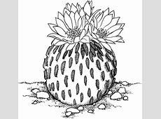 Pelecyphora Aselliformis or Peyotillo Cactus coloring page