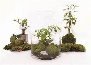 Terrarium Plante Deco : r sultat de recherche d 39 images pour terrarium plante deco ~ Dode.kayakingforconservation.com Idées de Décoration