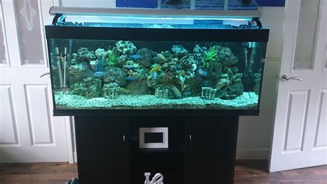5ft 400 litre juwel fish tank set up sheffield south pets4homes