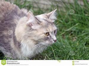 Stalking Cat Stock Photo - Image: 25748800