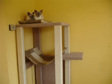cat scratching post siamese cats  kittens