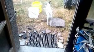 Détruire Un Nid De Guêpes : d truire un nid de gu pes sans insecticide youtube ~ Melissatoandfro.com Idées de Décoration