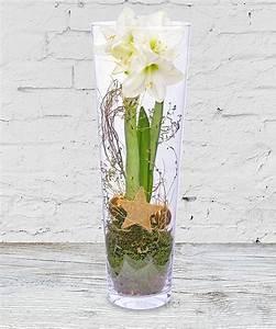 Amaryllis Im Glas : amaryllis wei im glas jetzt bestellen bei valentins valentins blumenversand blumen und ~ Eleganceandgraceweddings.com Haus und Dekorationen