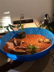 Russian Tortoise habitat. A kiddie pool idea, and they ...