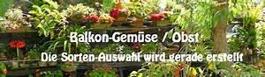 Gemüse Auf Dem Balkon : gemuse auf dem balkon hochbeet garten ~ Lizthompson.info Haus und Dekorationen