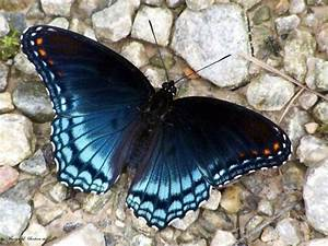 The Most Beautiful things in the world: Beautiful Butterfly