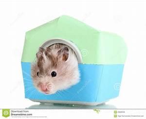 Hamster Graphics | Car Interior Design