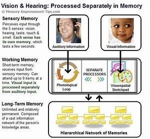 Verbal & Non-Verbal Memory: Two Separate Pathways