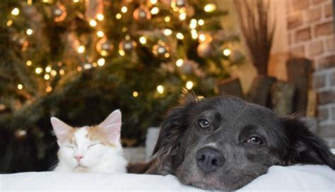 Labākās svētku dāvanas kaķiem un suņiem, kuras novērtēs ...