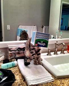 31 cats that instantly regretted their poor choices