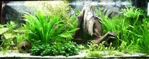 design aquarien essential advice for starting a home aquarium boneblogger science and the outdoors