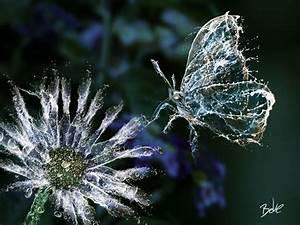 Ice, Fire and Water Digital Art by BOKE | Butterfly ...