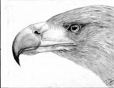 Eagle Head Drawing Eas...