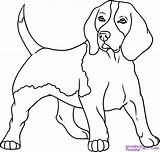 Beagle Coloring Dog Puppy Animal Line Draw Beagles Step Drawing Drawings Tattoo Pet Animals sketch template
