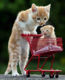 how to take care of a cat how to take care of a kitten hirerush