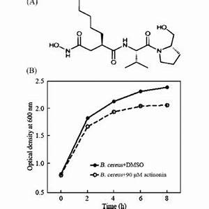 (PDF) Antimicrobial activities of actinonin against ...