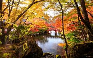 Autumn, Park, In, Fushimi, Ward, Japan, 4k, Ultra, Hd, Wallpaper, For, Desktop, Laptop, Tablet, Mobile, Phones