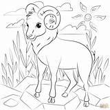 Coloring Ram Sheep Printable sketch template