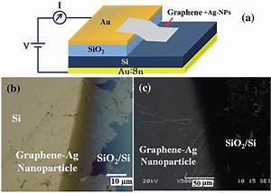 Photoresponsivity Of Silver Nanoparticles Decorated