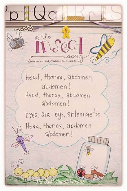 Science Anchor Charts Bug Chart Insects Grade