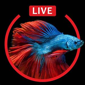 Aquarium Live HD Wallpapers for Lock Screen on the App Store