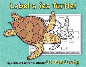 Label A Sea Turtle   Body Parts Diagram