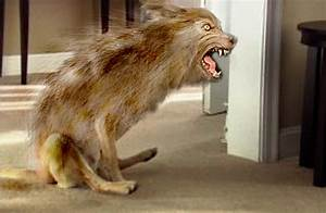 werewolf sighting ass dragging werewolf ruins carpet With dog rubbing but on floor
