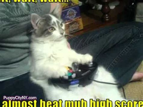 cute pets playing video games youtube