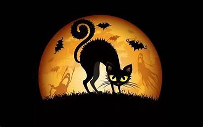 Halloween Cat Backgrounds Background Funny Desktop Wallpapers