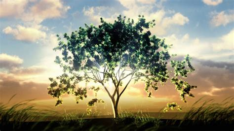 Video Background Tree Growing At Sunrise Object In The