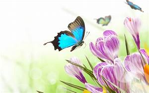 Spring Butterfly Wallpapers for Computer 7725 - HD ...