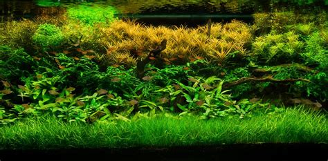 bed set for sale planted aquariums central live aquarium plants