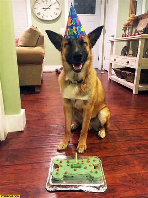 happy birthday dog smiling starecatcom