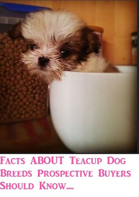 facts  teacup dog breeds prospective buyers
