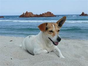 Urlaub Mit Hund Am Meer Italien : urlaub mit hund italien ferienhaus italien ~ Kayakingforconservation.com Haus und Dekorationen