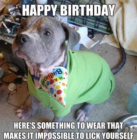 Dog Birthday Meme - 100 ultimate funny happy birthday meme s my happy birthday wishes