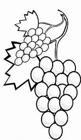 Grapes Coloring Pages Stalk Drawing Vine Clipart Fruits Line Colour Corn Without Vegetables Printable Clip Cliparts Play Library Getcolorings Getdrawings sketch template