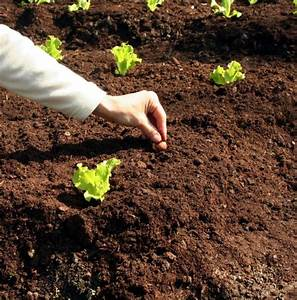 Step by step to great garden soils watters garden center for Gardening soil