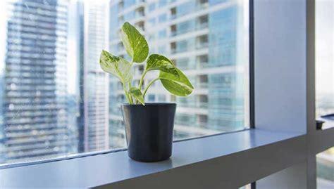 plante verte bureau les plantes vertes am 233 liorent la productivit 233 jobboom