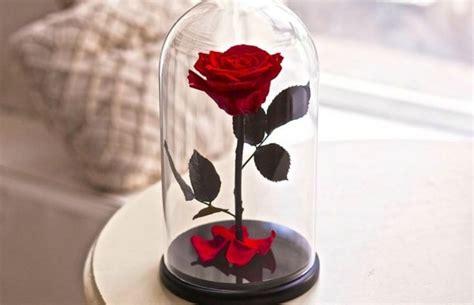 bunga mawar diberi mantra tidak layu kok bisa ya