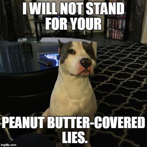 Pitbull Puppy Meme - pitbull memes image memes at relatably com